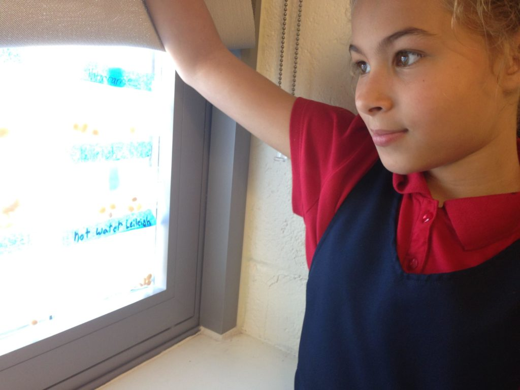 A student tutee with the DC STEM program looks confidently at a computer screen.